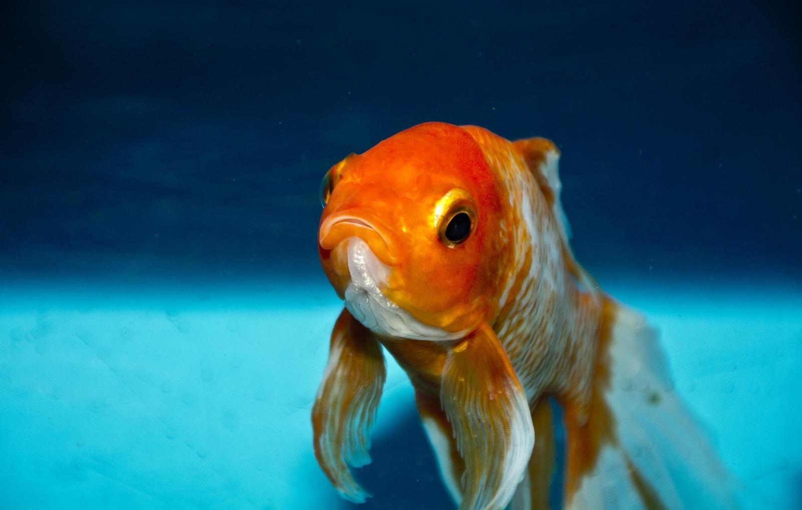 najdu mou rybku instant chemie dna datování