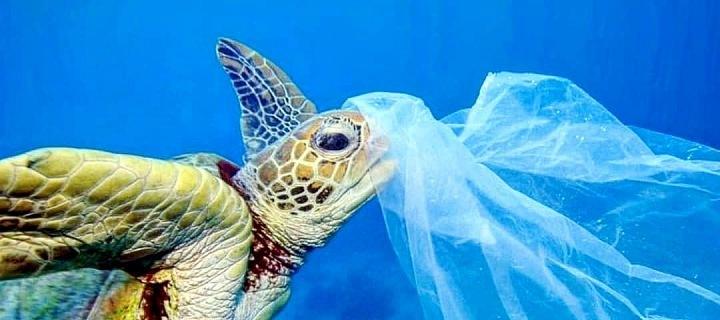 Zvířata díky odpadkům v moři často umírají