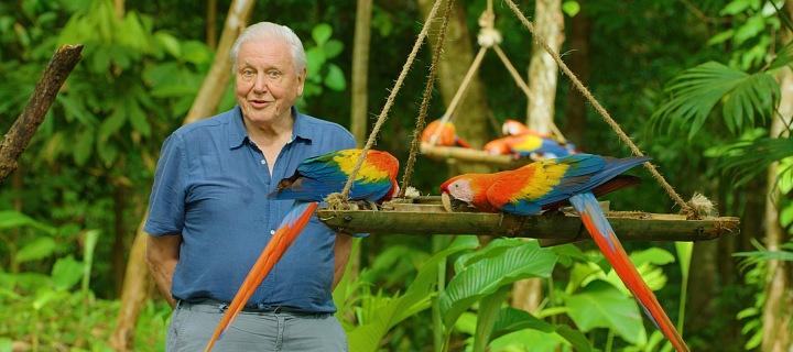 David Attenborough v pralese s papouškem