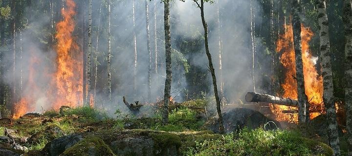 Stačí málo a hoří les.