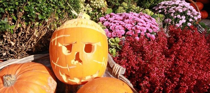 Halloweenská dekorace květinářství Metamorphosis