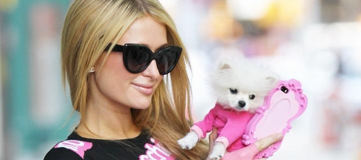 Paris Hilton se psem