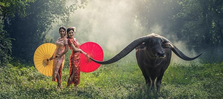 Ženy s buvolem