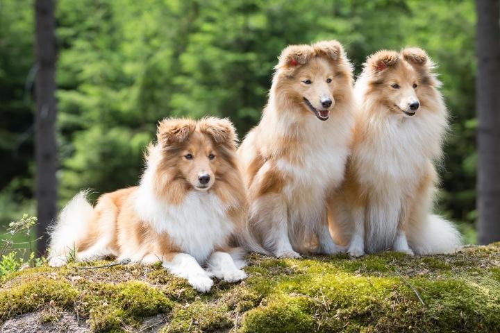 Češi psi milují. Jsme národ pejskařů.