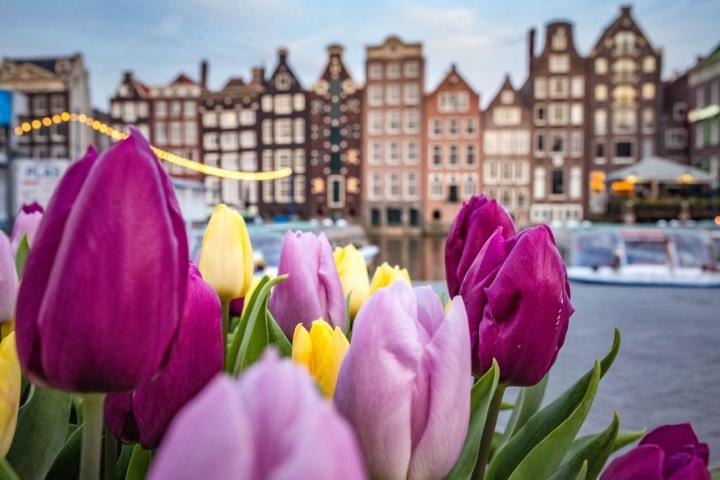 Tulipány i typická amsterdamská architektura