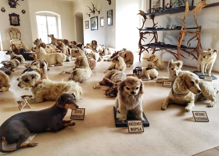 Hrad Bítov - sbírka vycpaných psů