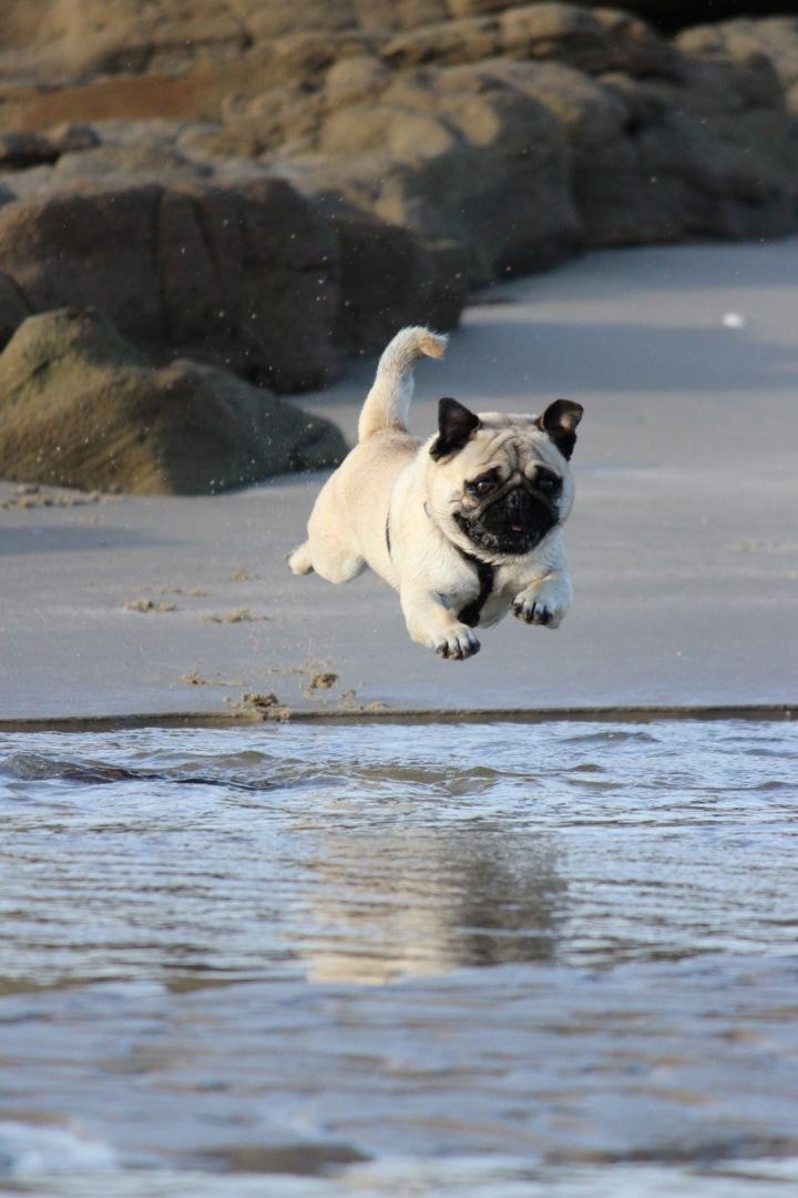 Pejsek běží do vody