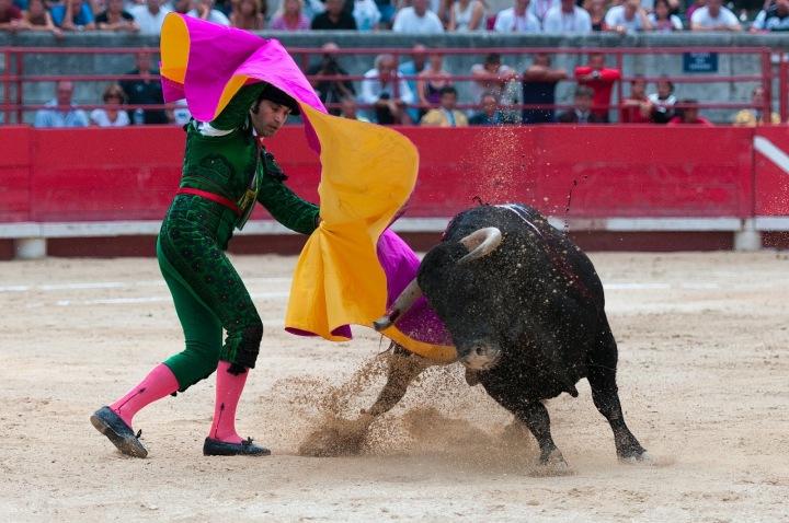 Toreador zápasí s býkem.