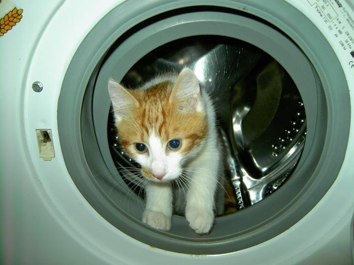 ňuňu, kočičku jen tak v pračce nevyperete.