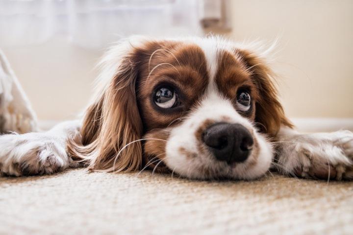 Pes čeká na svého pána
