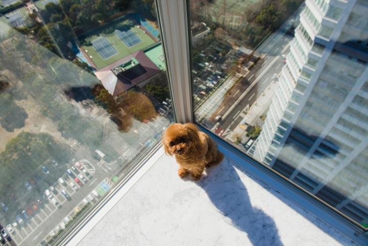Pes v bytě mrakodrapu.