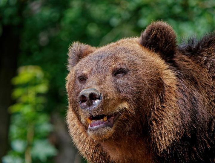 Když potkáte medvěda, zůstaňte v klidu!