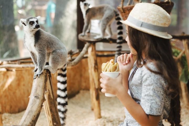 Dívka v zoo sleduje lemury