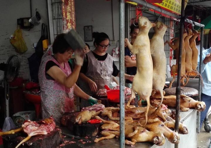 Festival psího masa.