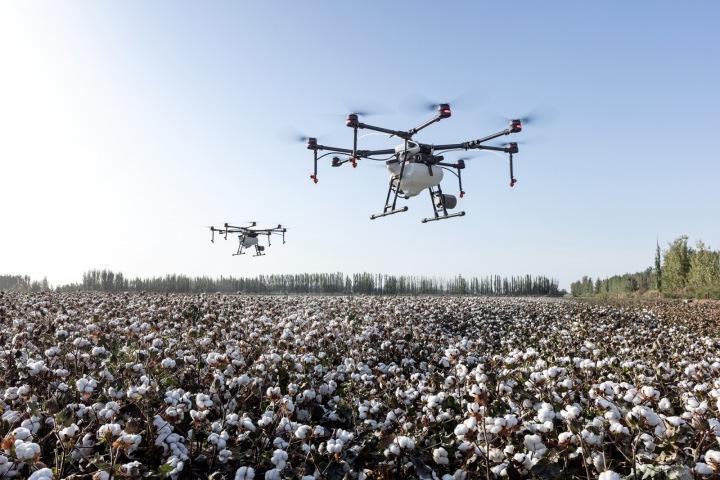 Dron nad bavlnou