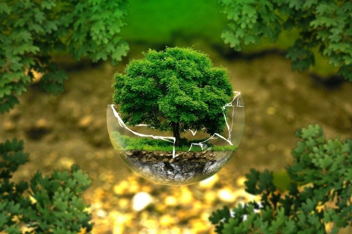 Ekologie, Ochrana životního prostředí, strom