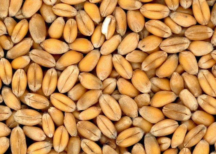 Semena jsou základem pro další růst plodin.