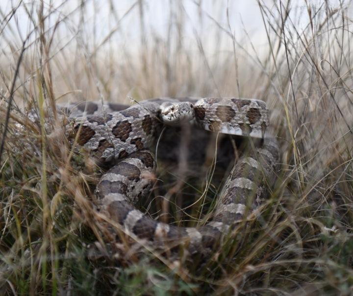 Had v trávě