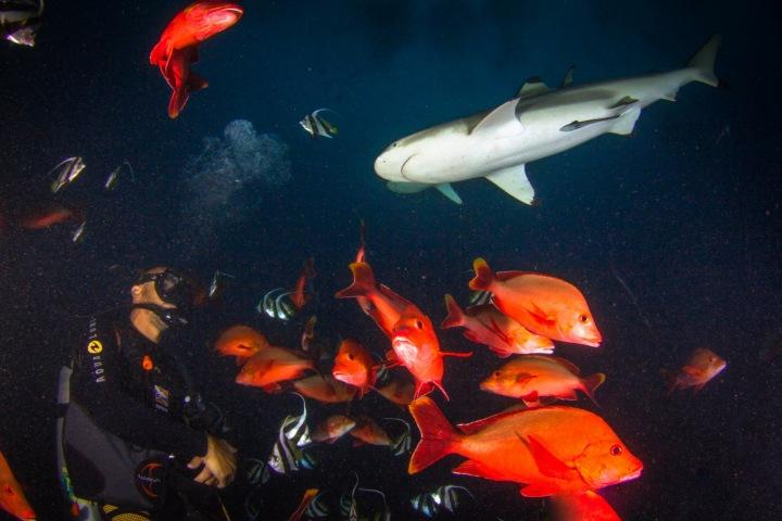 Krmení žraloků je nebezpečné, žralok si může návnadu splést