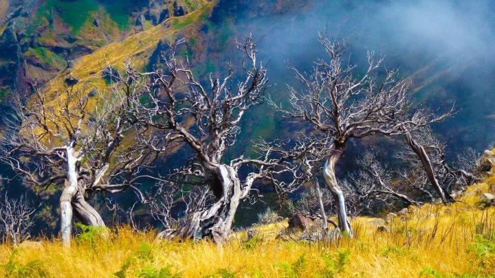 Na Madeiře je celý rok krásně a má úžasnou přírodu