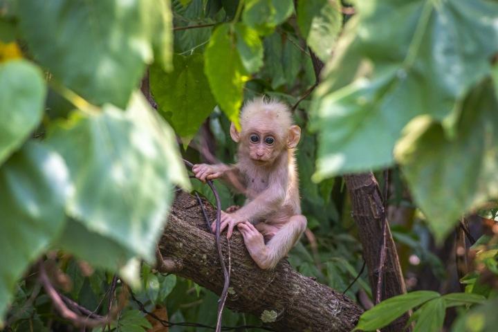 Mládě opice sedící na stromě