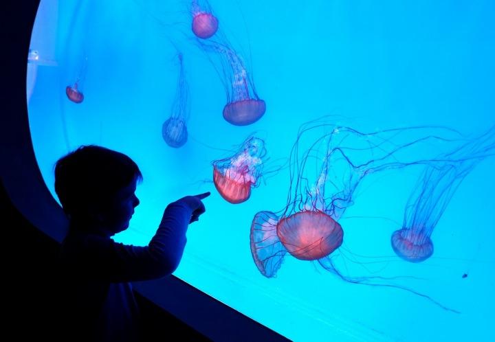 V medúzáriu se rozhodně nudit nebudou ani děti.