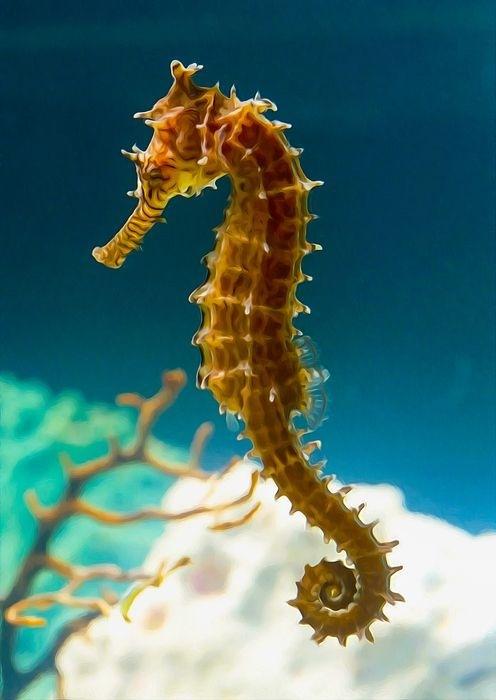 Japonští vědci vycházeli z ocasu mořského koníka