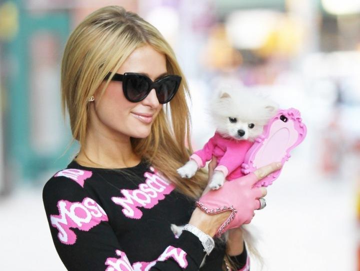 Dědička hotelového impéria, Paris Hilton