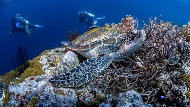 Potápěči, želva a korálový útes