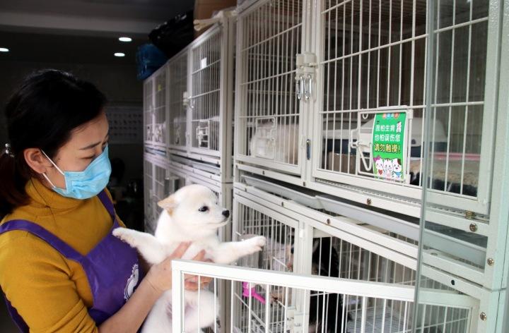 Způsob prodeje psů v Číně.