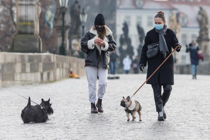 Venčení psů v centru Prahy, na Karlově mostě