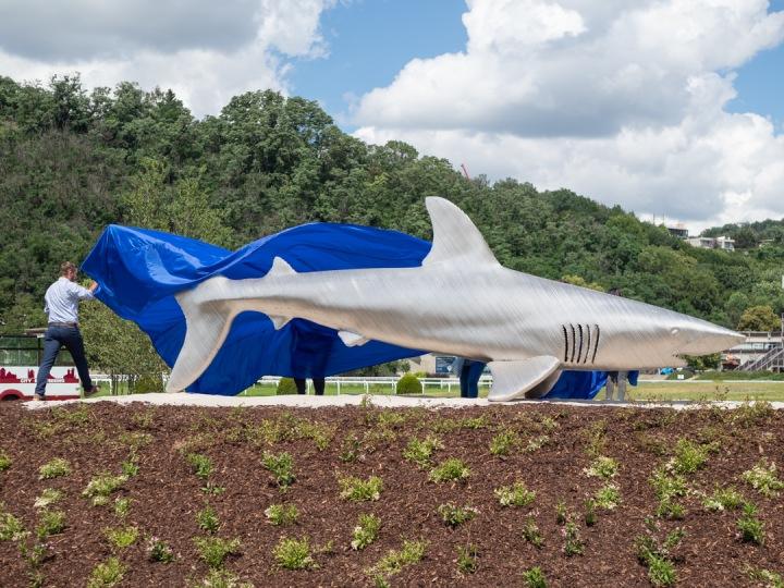 Socha ocelového žraloka.