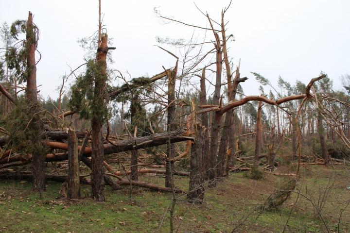 Zničeny byly i lesní porosty