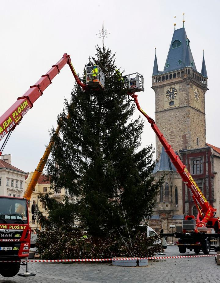 Letošní strom na Staroměstském náměstí v přípravách.