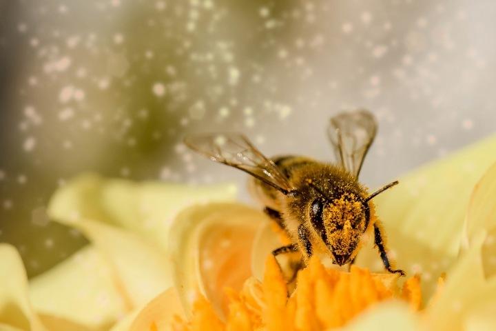 Včela sedící na květině