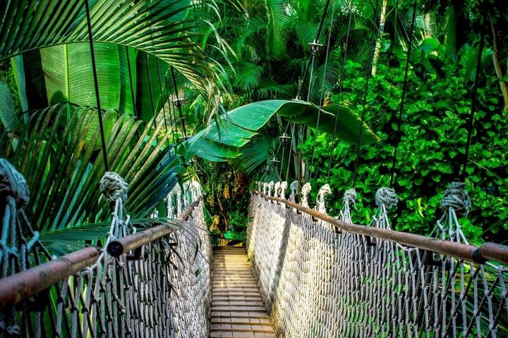 Visutý most v pralese