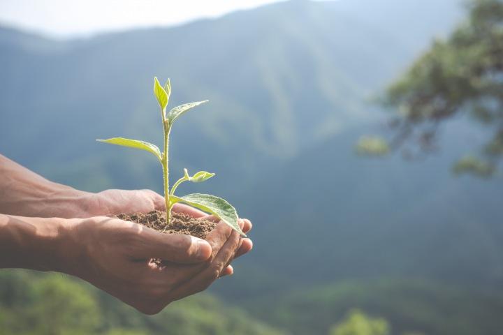 Rostlina v ruce.