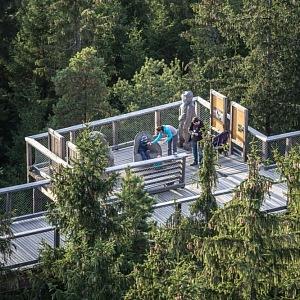 Stezky korunami stromů Lipno, jedná vyhlídková a výuková část