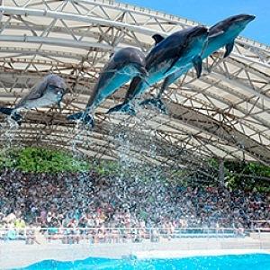Vystoupení delfínů je nezapomenutelným zážitkem.