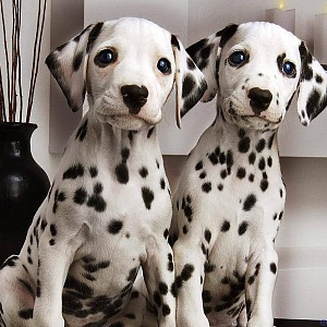 Pejskaři se mohou podílet na vývoji nové psí aplikace.