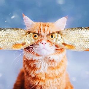 Foto Kristina Makeeva, série kočka Kotleta