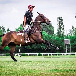 Obdivujte krásu koní