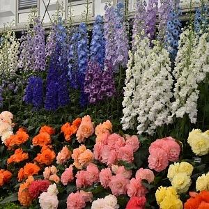 Každý rok se do zahrad sjedou tisíce návštěvníků.