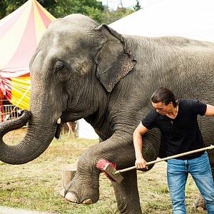 Slonice jsou rády čisté.