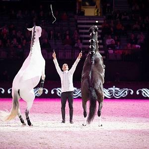 Koně umí divy.