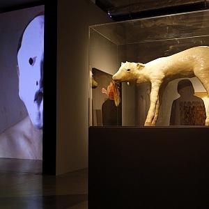 Výstava Daniela Pešty, DOX