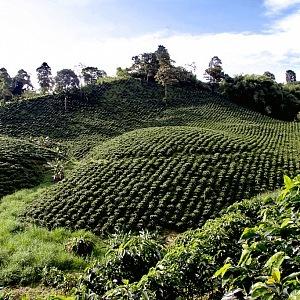 Kávové plantáže Kolumbie