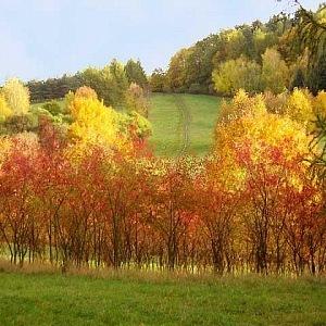 Šárecké údolí na podzim