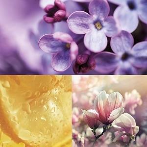 Hlavní esence parfému EUTOPIE No.11