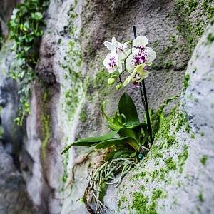 Nádherné prostředí Papilonia